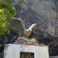 Орел на Учан-су