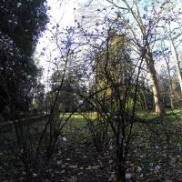 Зимний Никитский ботанический сад