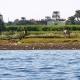 Верблюды у Нила