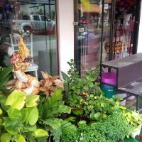 Магазин цветов в Тае