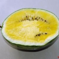 Желтый тайский арбуз