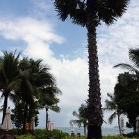 Разные типы пальм