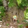 Старое седое дерево