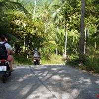 По дороге в джунгли