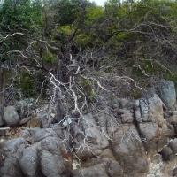 Деревья на koh tan