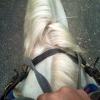 Цезарь лошадь