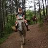 По лесу на лошади