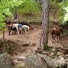 Лошади у горной реки