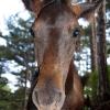 Маленький лошаденок