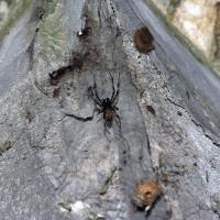 Явно не безопасный паук в саду