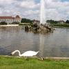 Лебеди в Мюнхене
