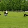 Немцы гуляют с собаками