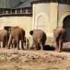 Слоны в Хеллабрун