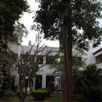 Деревья в отеле
