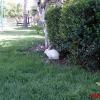 Кролики на траве отеля