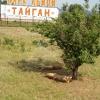 Сафари парк львов Тайган