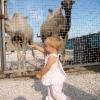Верблюды тоже есть
