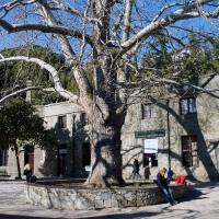Дерево, существовавшее еще до строительства дворца