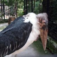 Птица грустит